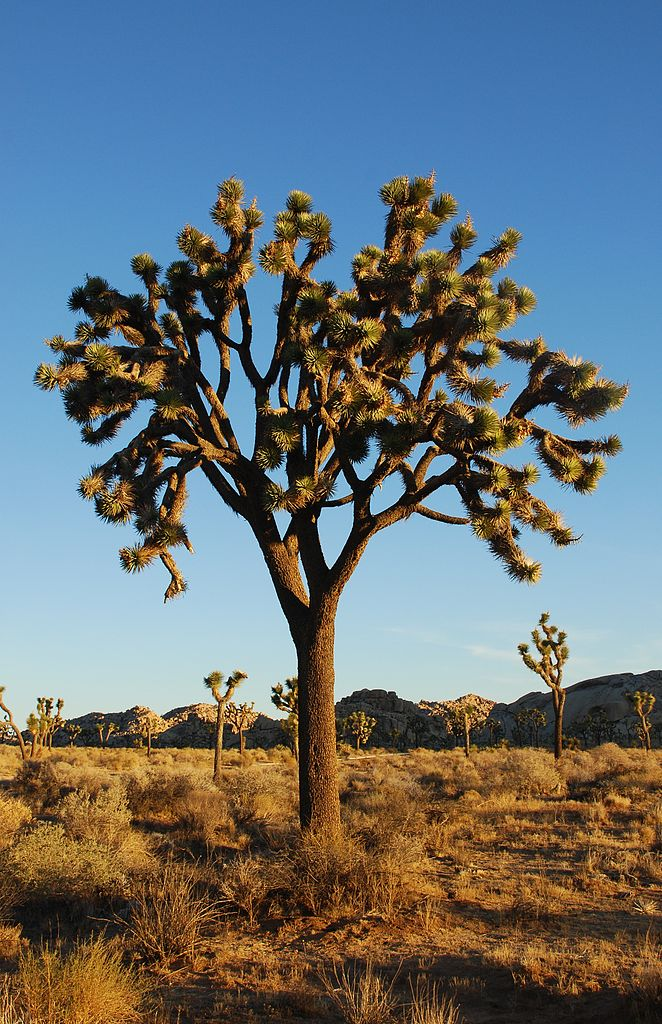 California Joshua Tree, illustrating a page about collections services in New York State.